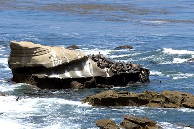 La Jolla Sea Lions