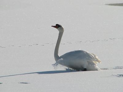La Rochelle neige 2010