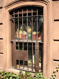Homey house plants soaking up the sun in a Clinton Hill window.