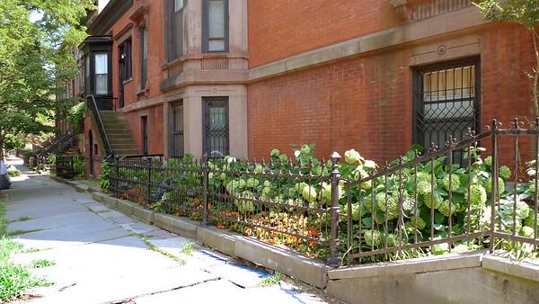 Same house, sidewalk plantation.  Hydrangeas and impatiens.