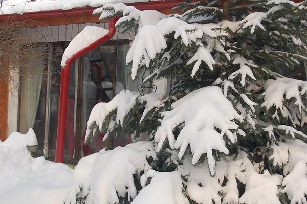 Iarna la Nuci
