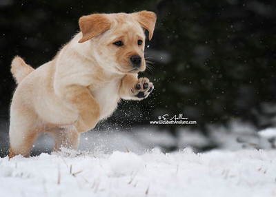 Puppy in snow