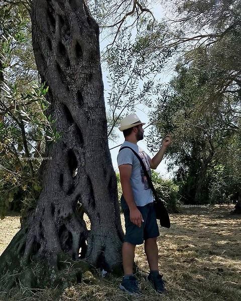 Grecia  Impegni della giornata di oggi: - contare i ricci dal molo ✔️ - accarezzare le foglie degli ulivi ✔️ - relax ✔️ E da #Corfù è tutto... per oggi! #Grecia . . . #visitgreece #visitcorfu . . . #gaystag