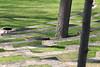 20090418 Swarthmore (5)