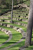 20090418 Swarthmore (15)