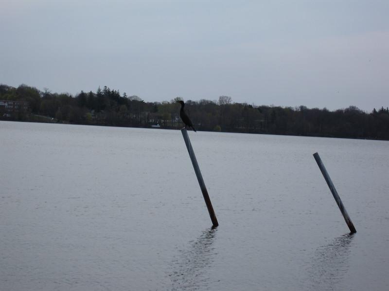 20090412 Lake Ronkonkoma (3)
