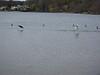 20090412 Lake Ronkonkoma (8)