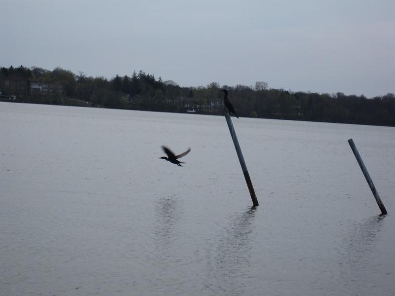 20090412 Lake Ronkonkoma (1)