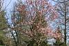 20090418 Swarthmore (8)