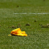 A single yellow penatly flag on green grass.