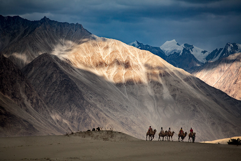 Riding camels, Hundar sand dunes. Nubra Valley.