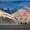 Riding camels, Hundar sand dunes. Nubra Valley.