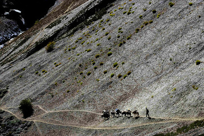 Ponies approach the bottom of the climb to the Parfi la - the last pass on the trek to Padum