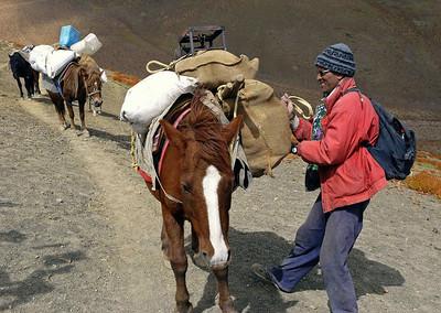 My pony man  Bilayti Ram adjusts loads below the Kuipa la pass