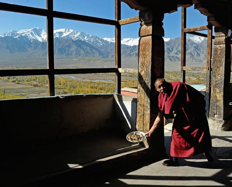 Lama at Thikse