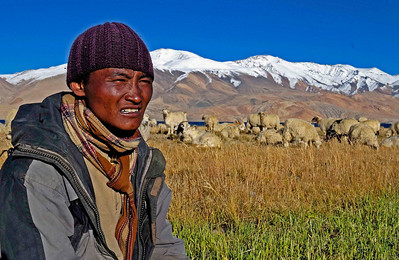 Larkyang, a shepherd, with his flock at Tso Moriri