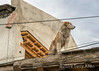 Street dog on the roof, Leh, Ladahk