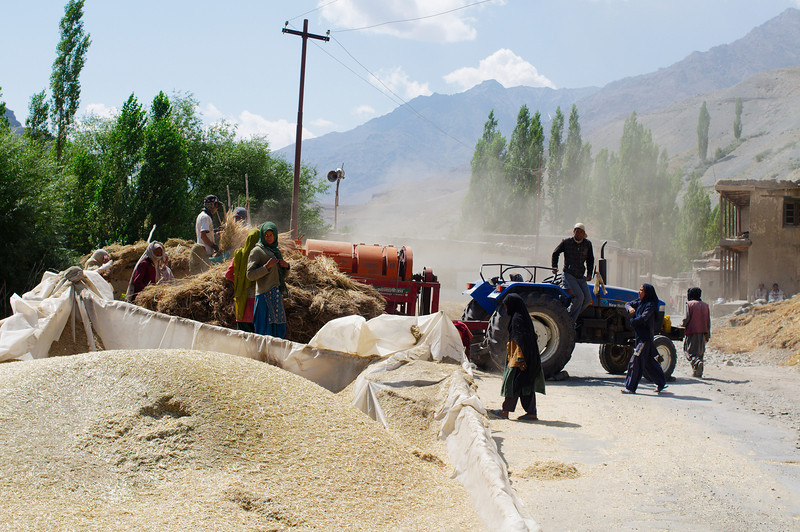 Village harvest blocking the highway between Kargil and Mulbek