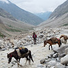 Kesar and our ponies passing us at the flooded section of the road from Palamo to Zanskar Sumdo