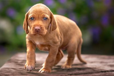MIL Pet Photography - Dog Photographer