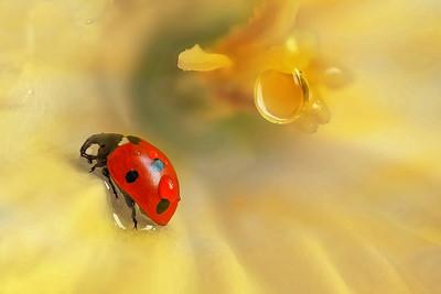 Ladybird  - 4