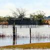 Rain Day, Acadiana Louisiana 120416 013