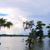 Lake Martin, Breaux Bridge, Louisiana 08062018 024