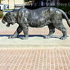 LSU Baseball, Baton Rouge, Louisiana 11182017 012