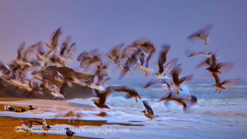 20120107_Laguna Beach_3575