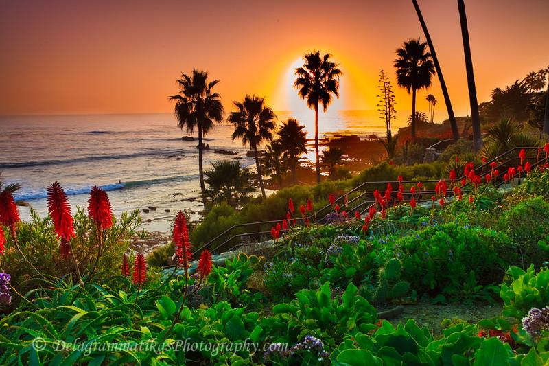 20120107_Laguna Beach_3586