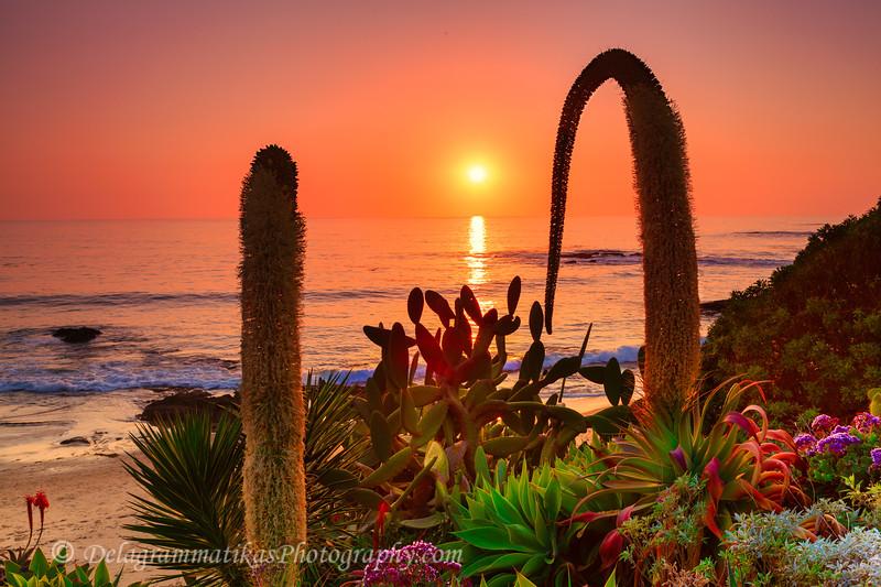 20120107_Laguna Beach_3594