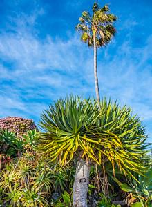 Laguna Beach 13