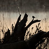 bird silhouette on a log