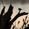 bird and log silhouette