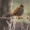 Sparrows pose