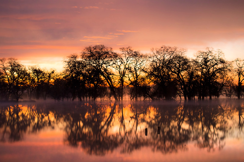 Dawn reflections