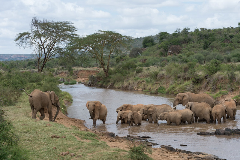 Elephants crossing river