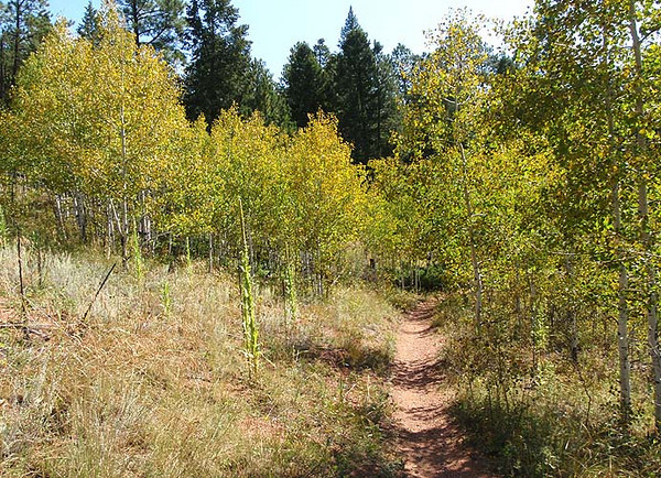 Fall is in the air on the Colorado Trail