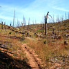 Morrison Creek Singletrack