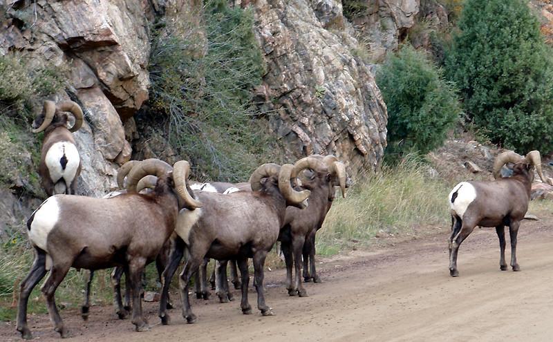 Tis the season, Waterton Canyon, Colorado