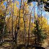 Colorado Trail, Segment 6