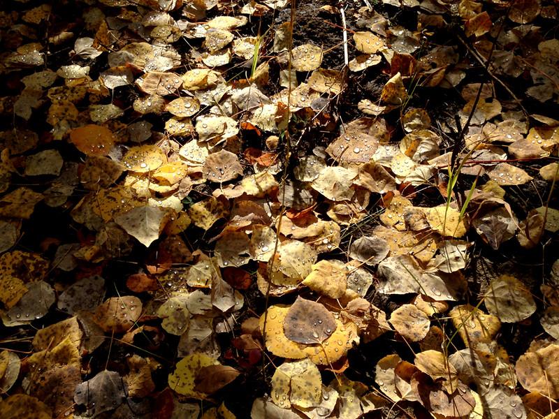 Forest floor, Ohio Pass, Colorado