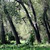 Chatfield Reservoir wetlands