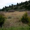 Pinyon-juniper and short-grass prairie ecosystem interface.