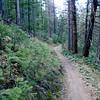 Delightful forest singletrack