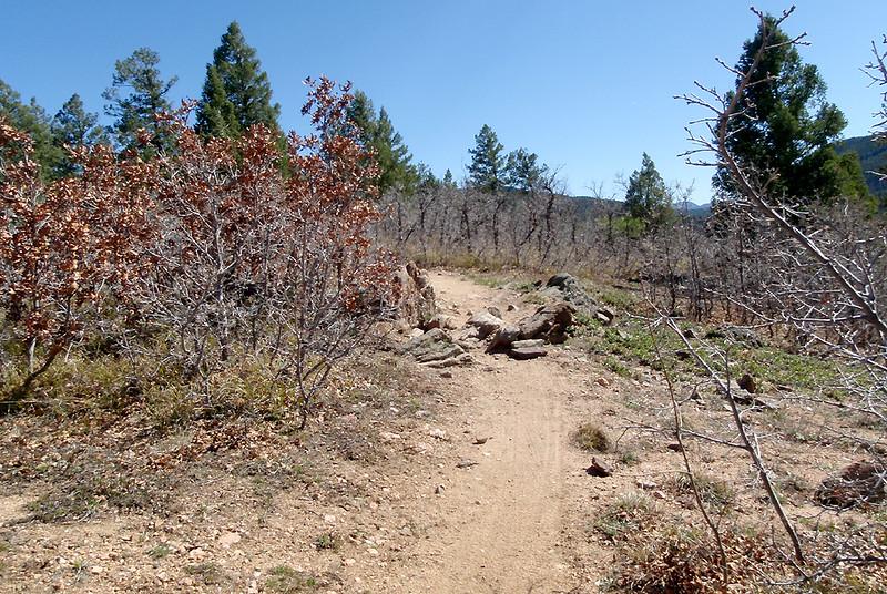 Trail 800, heading south