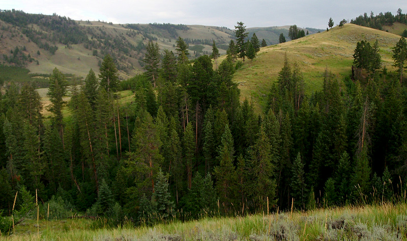 North Yellowstone National Park