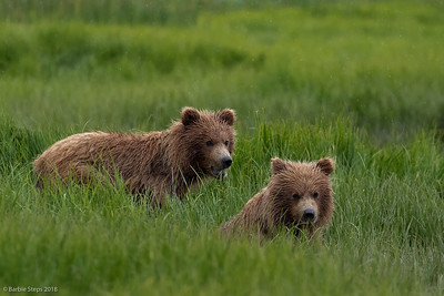 Young cubs (1-1/2 yr old)  with mom