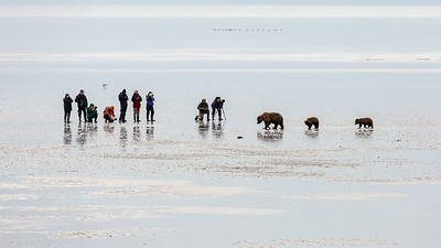 Photographers on the tidal flats