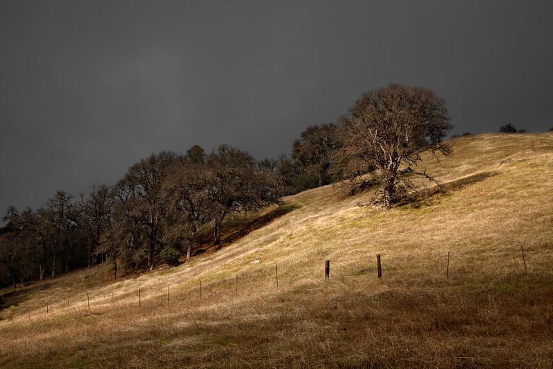 ~ Hillside Light ~